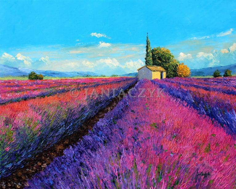 Evening light on the lavender 55x46 cm